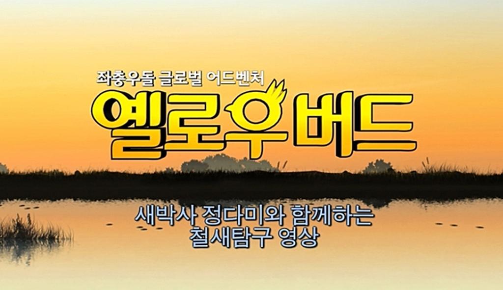 [옐로우버드]철새 탐구 영상