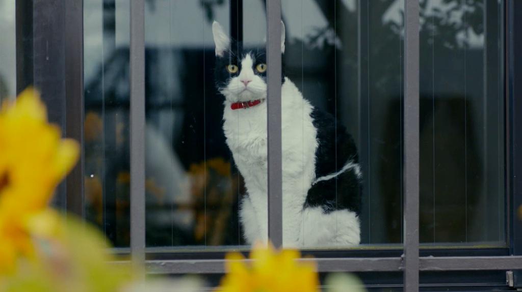 [고양이 여행 리포트]뮤직비디오