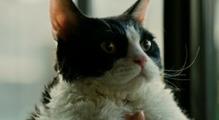 [고양이 여행 리포트]나나 입덕 영상