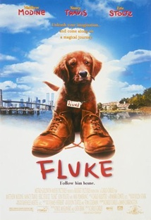 플루크 포스터