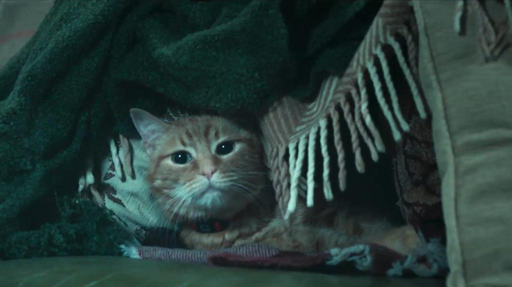 [내 어깨 위 고양이, 밥 2]밥 매력 모음ZIP 영상